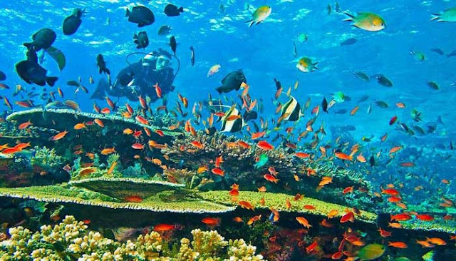 Diving Di Banda Neira