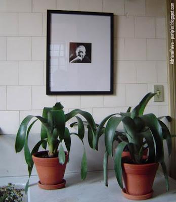 Hilda Hilst - Casa das Rosas - Espaço Haroldo de Campos de Poesia e Literatura - Foto por Adriana Paiva