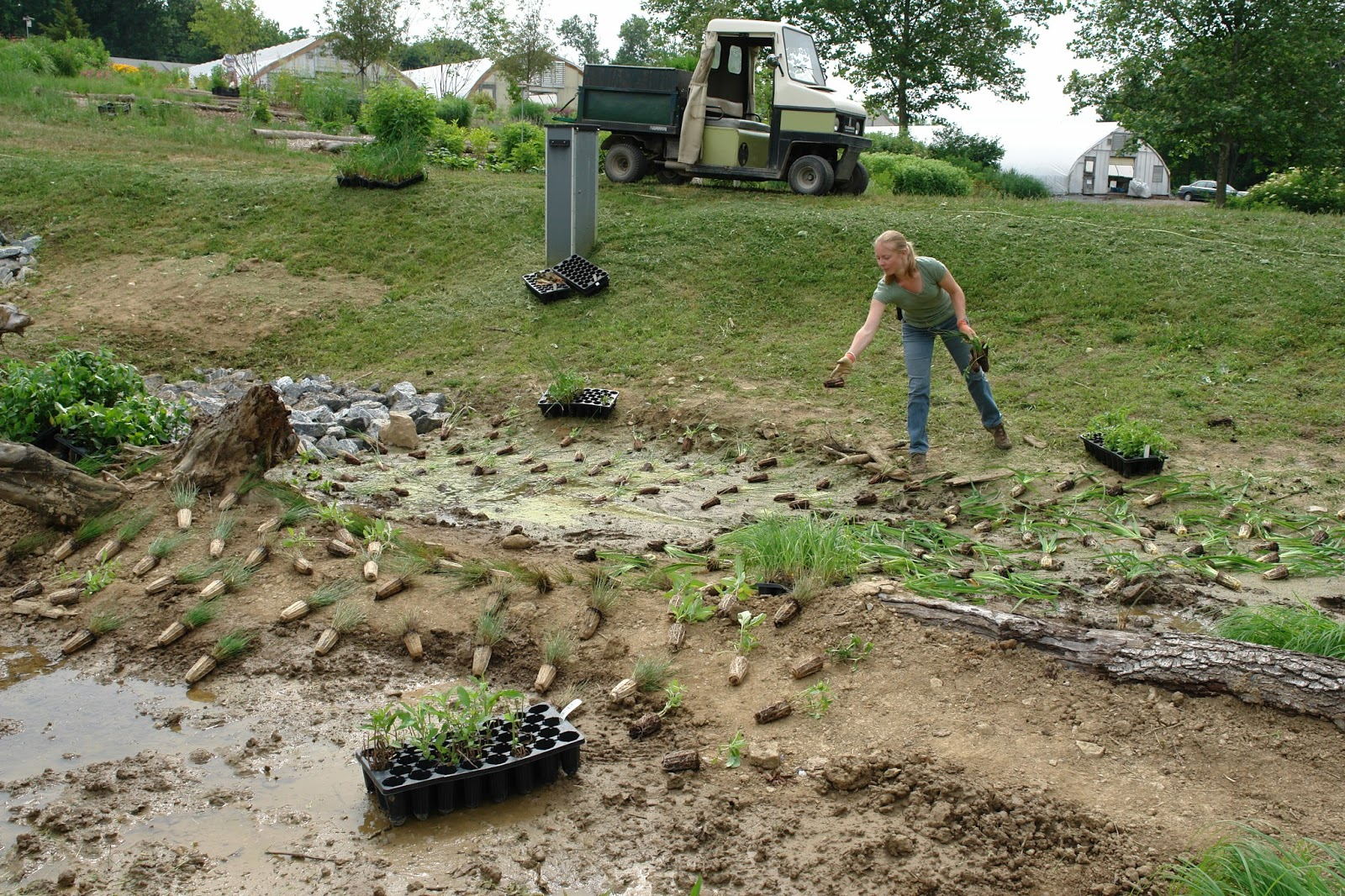 Claudia West In Her Element Laying Out Plants For A Trial Garden At North Creek Nurseries Photo Courtesy Of