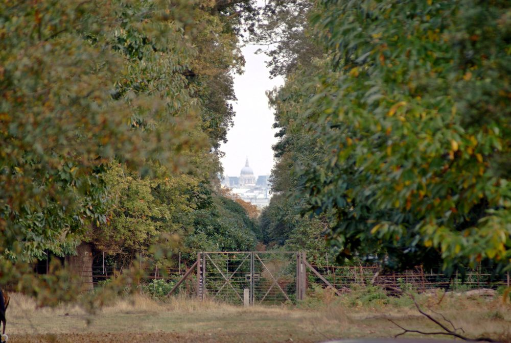 St Paul's Cathedral from Richmond Park