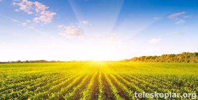 Organik tarım ile para kazanmak
