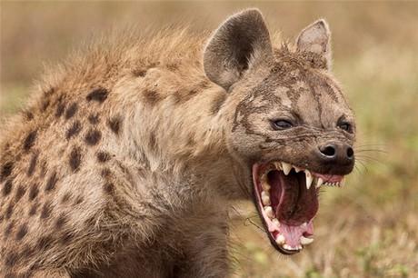 đánh bại một con linh cẩu không