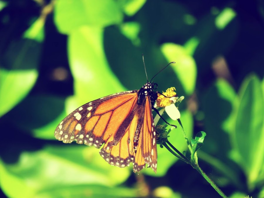 A butterfly holding onto a dear branch in nature against a green leafy plant