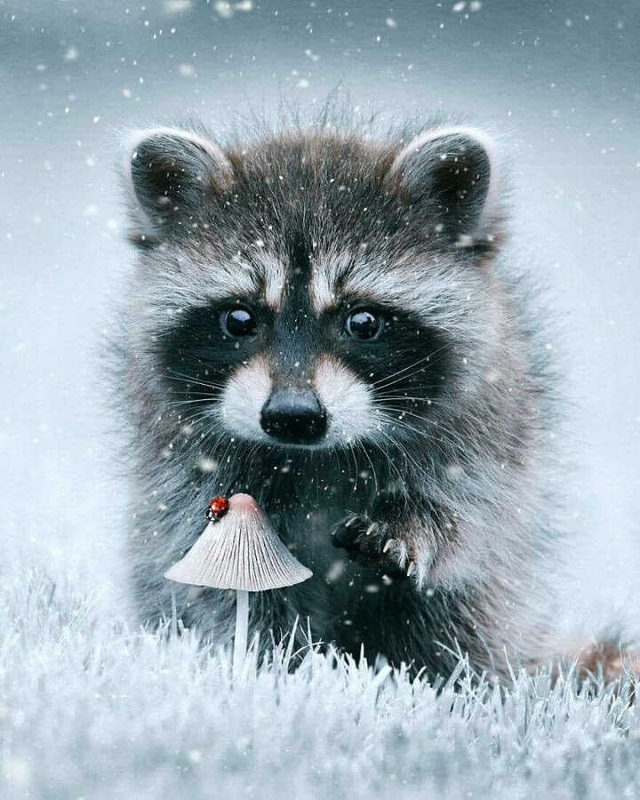 08-The-Raccoon-and-the-Ladybird-Ted-Chin-www-designstack-co