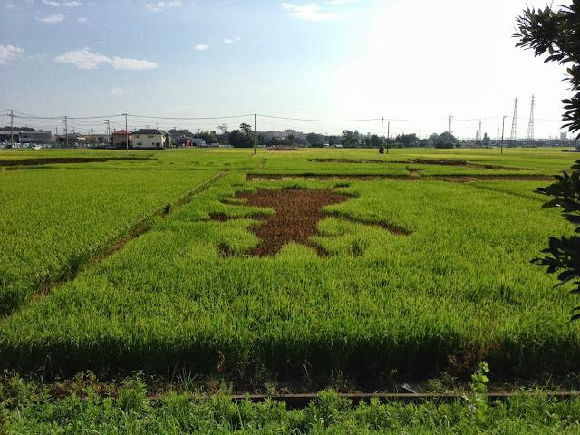 こしがや田んぼアート2013ウルトラマン(9/1)