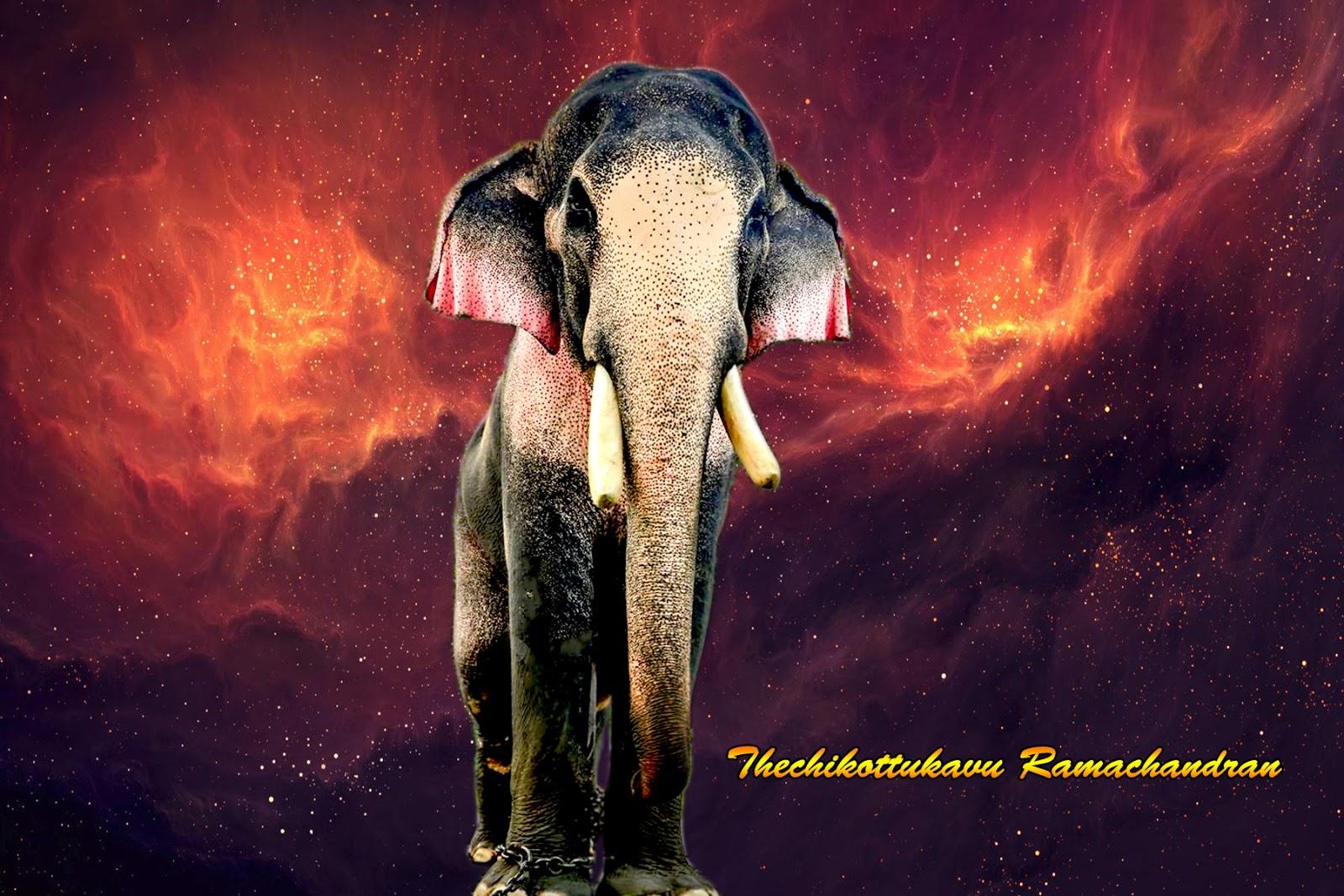 Kerala Elephants Wallpapers HD