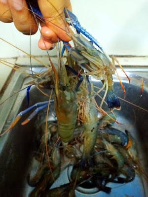 Menu Tengahari Sambal Tumis Udang Galah Dengan Ikan Kerisi Goreng