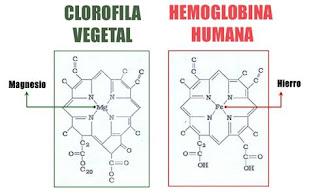 Semelhanças na estrutura da clorofila e da hemogloblina