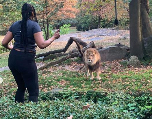 Mulher invade área restrita em zoo de NY e dança perto de leão