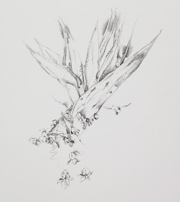 flower drawing, graphite on vellum