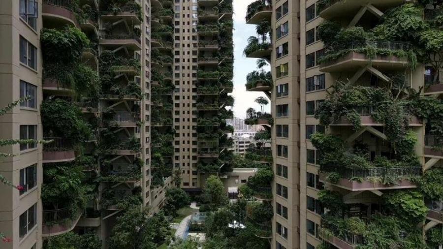 Qiyi City Forest Garden