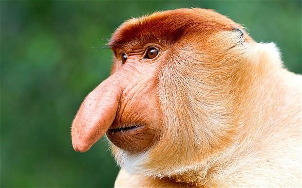 İlginç Görünüşlü 5 Hayvan