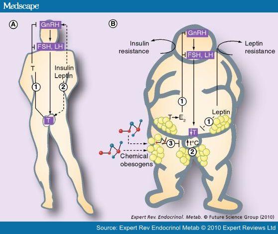 Лептин - главный гормон и регулятор энергетического обмена