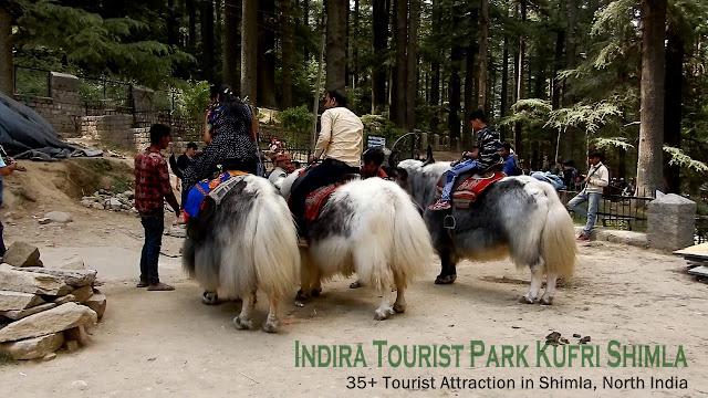 Shimla Attraction - Indira Tourist Park Kufri Shimla