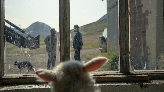 sheep spying through a window