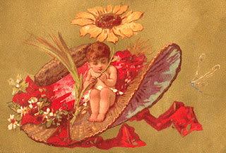 hat cherub fashion daisy flower image