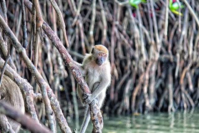 Mangrove Tour, Travel Itinerary: Let's Visit Sepang, Selangor, Travel Itinerary,Visit Sepang, Visit Selangor, Cuti Cuti Malaysia, Travel Local, Travel