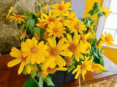 flowers, sunflowers, beauty, flora, magic of paya, paya bay resort,