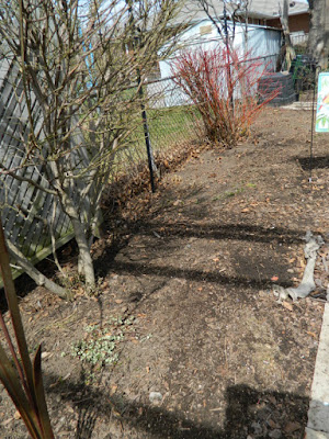 Etobicoke spring garden clean up after by Paul Jung Gardening Services Toronto
