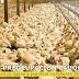 Comunidad de Población Loyola y Barrio Estación en alerta ante eventual instalación de criadero de pollos