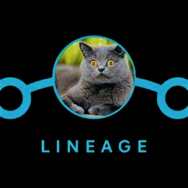 LineageOS 15 1 2019 03 05 Extended Build for Mido🐈 by