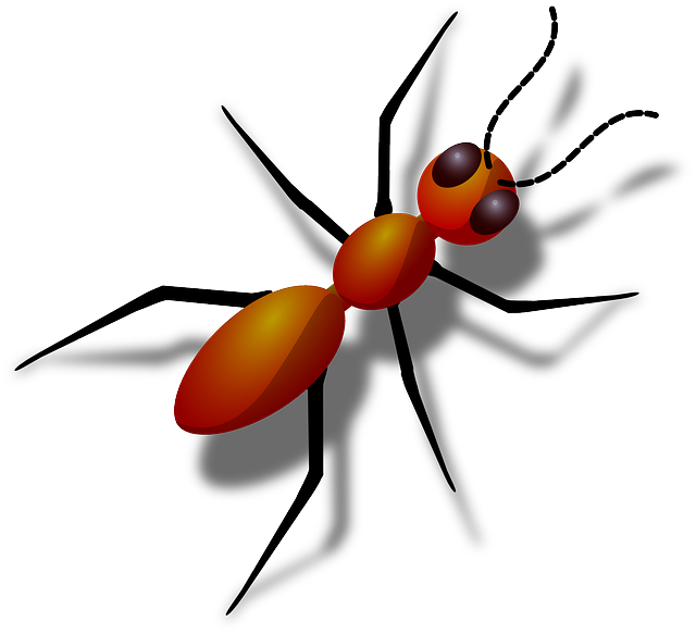 110+ Crazy Information & Facts About Ants In Hindi
