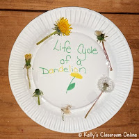Dandelion Life Cycle Craft by Kelly's Classroom Online