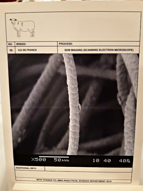 Electron microscope picture of sheep fleece fibre - The Woolist talk - Theatr Clwyd Sept 2019