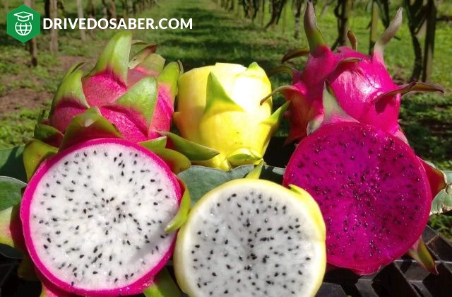 como plantar pitaya
