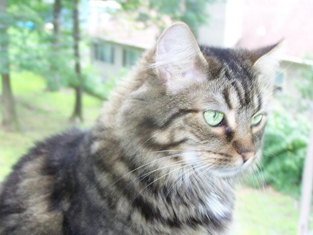 10 dicas de limpeza para quem tem gato em casa