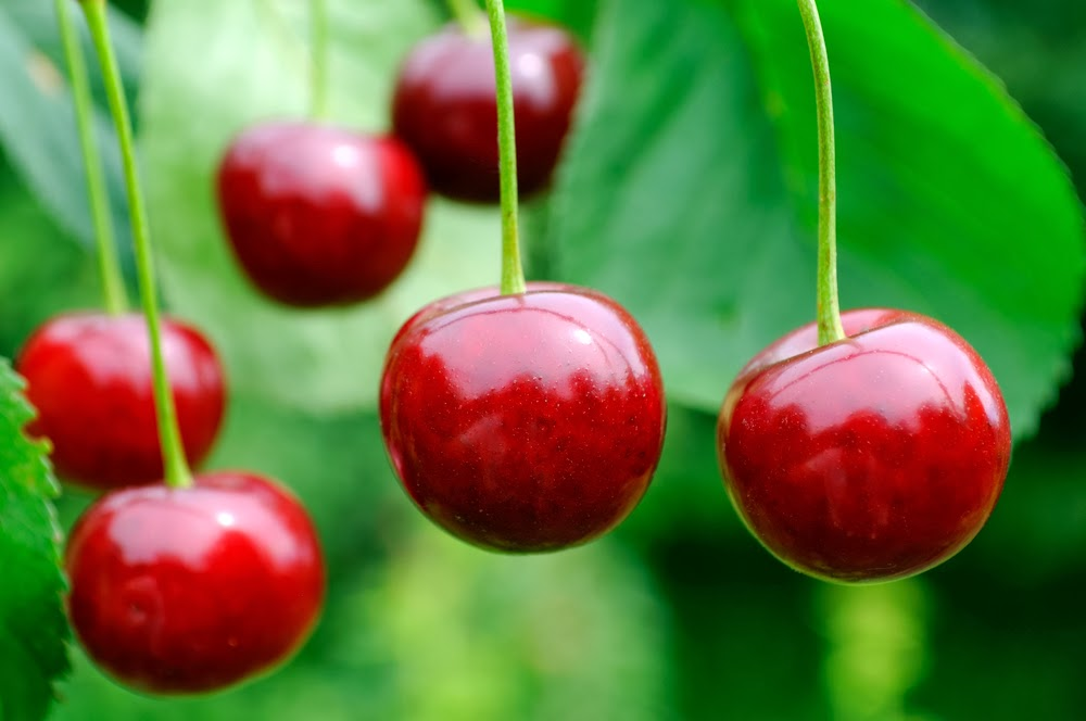 Tart Cherries - The Natural Cure For Inflammation
