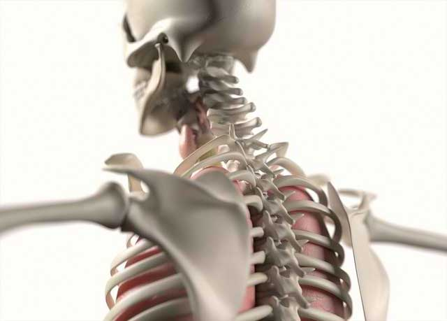 Beberapa Orang Memiliki Tulang Rusuk yang Jumlahnya Lebih Banyak