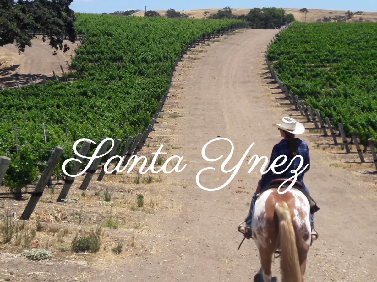 Balade dans le vignoble de Santa Ynez