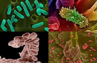 Obat Untuk Penyakit Sipilis Yang Ampuh Dan Alami DiApotik