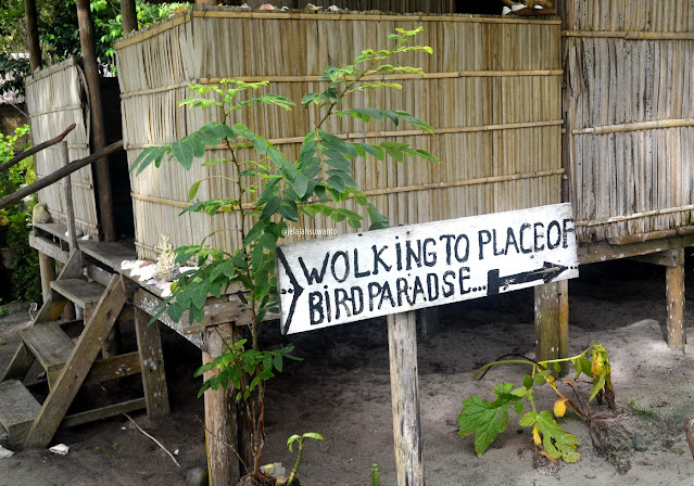 Baiklah hayuk kita wolking to place of bird paradise di sekitar Batu Lima Homestay Raja Ampat ⒸJelajahsuwanto