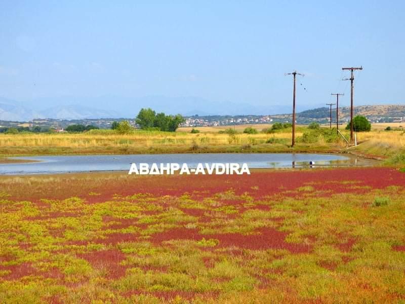 Ξάνθη: Εντυπωσιάζουν τα κόκκινα λιβάδια στη Σκάλα Αβδήρων - ΦΩΤΟ