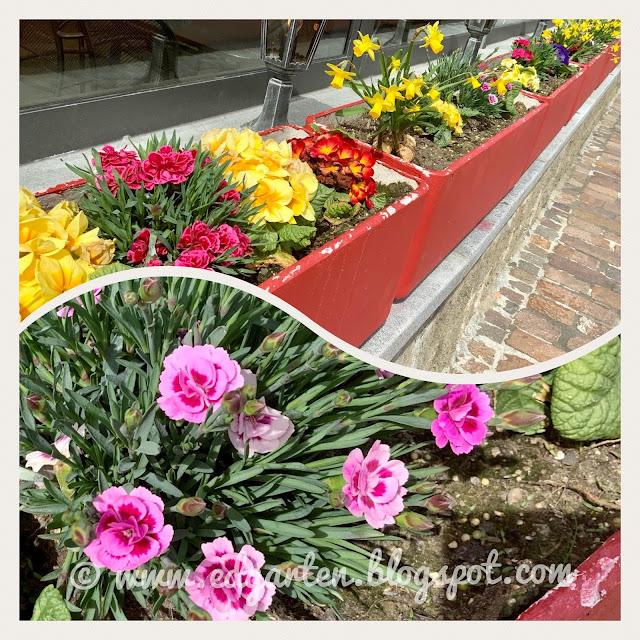 Blühende Rabatte im Frühling