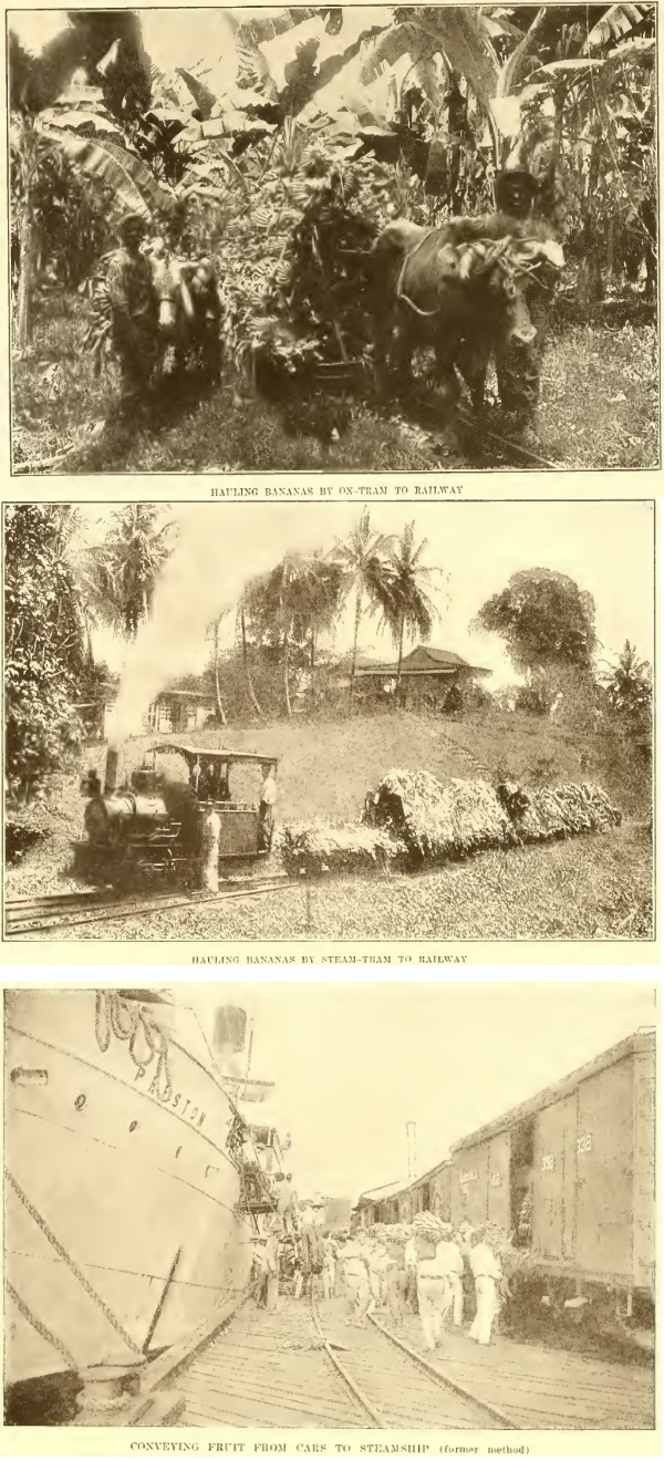 United Fruit Company bananas Plantations