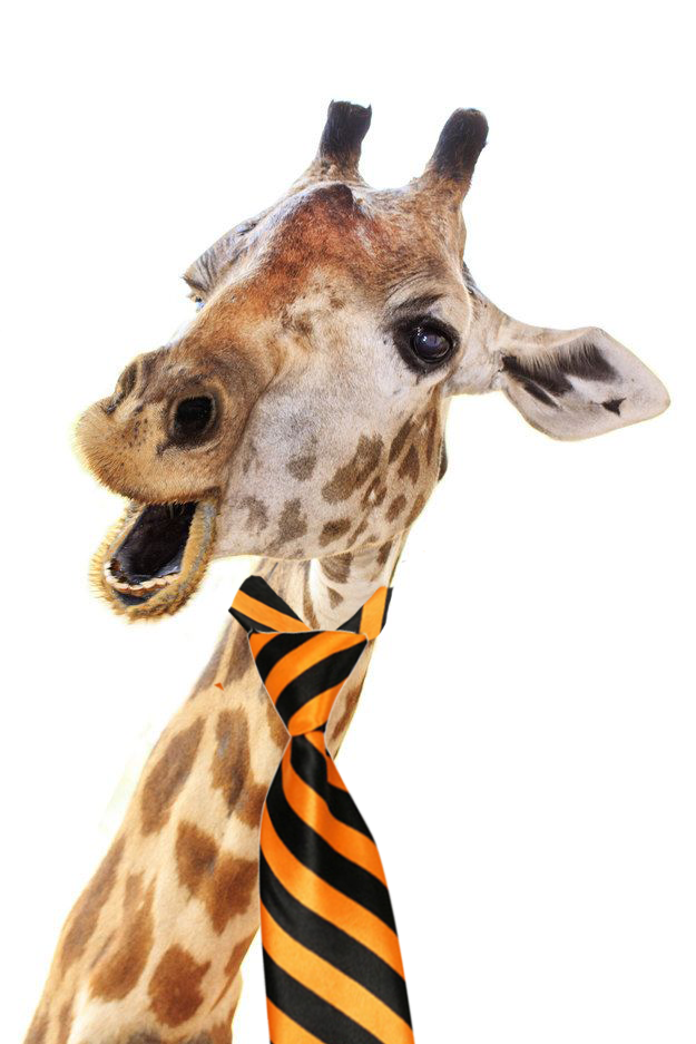 How should a giraffe tie his tie
