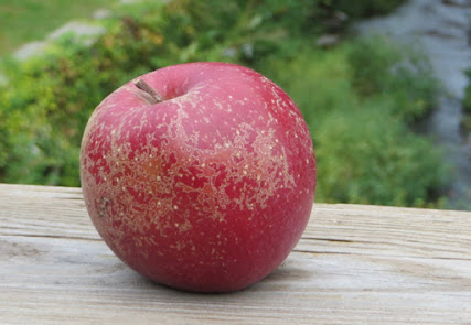 Deep red apple with russet and lenticel spots