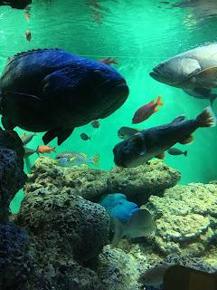 葛西臨海水族園の魚たち
