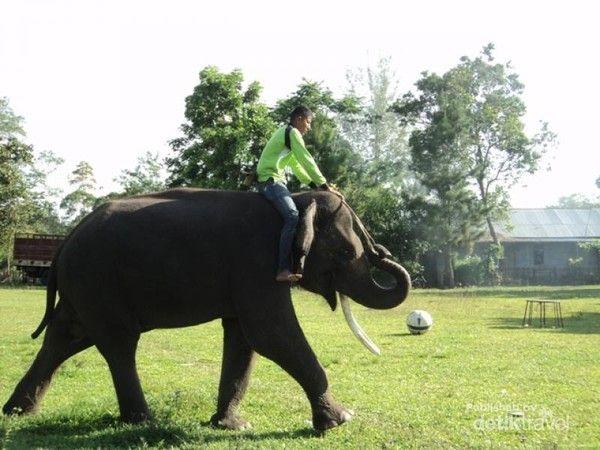 gajah saree