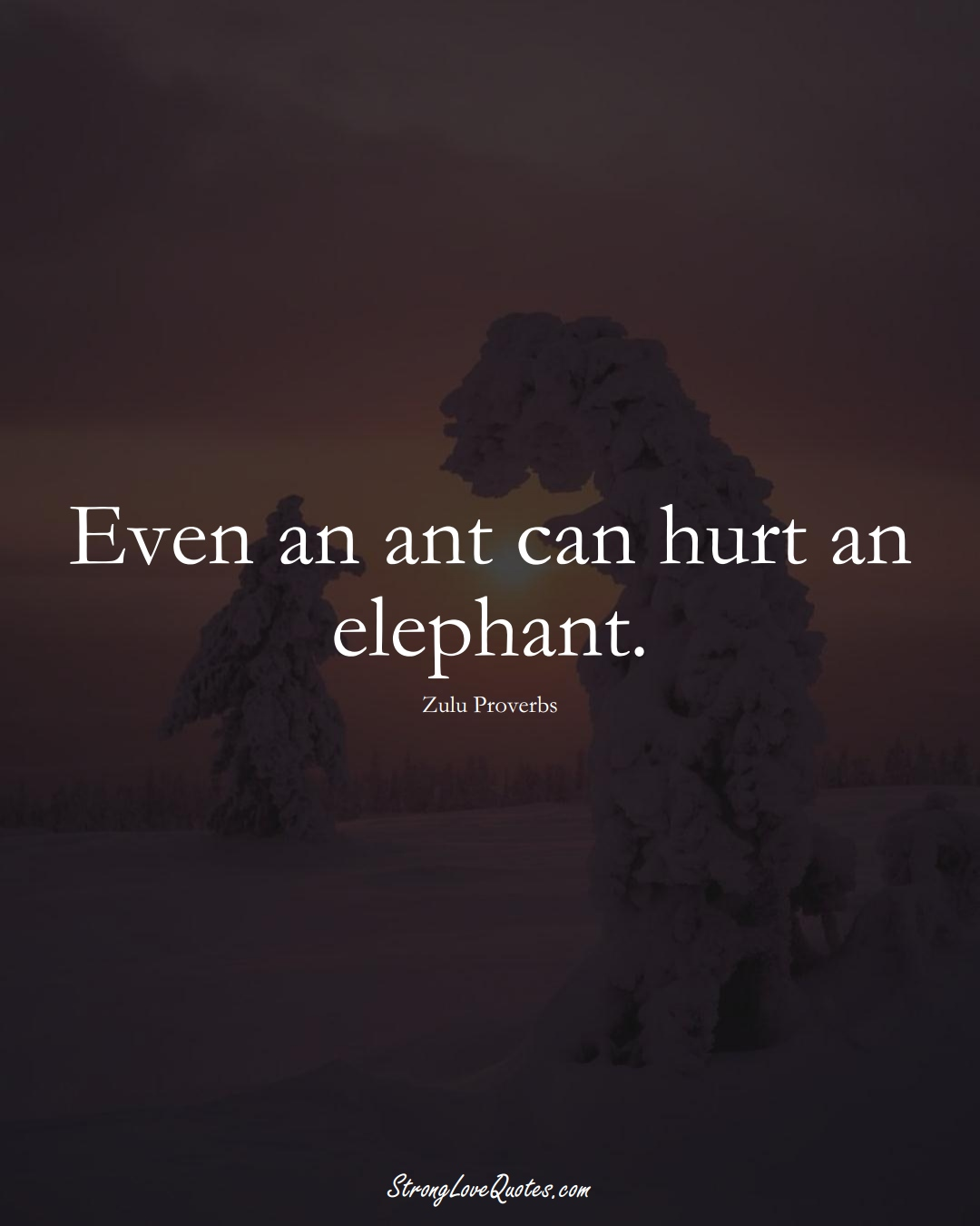 Even an ant can hurt an elephant. (Zulu Sayings);  #aVarietyofCulturesSayings