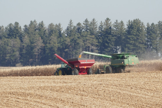 Minnesota corn fertilizer guidelines 2020