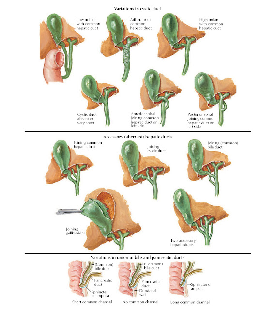 Variations in Cystic, Hepatic, and Pancreatic Ducts Anatomy
