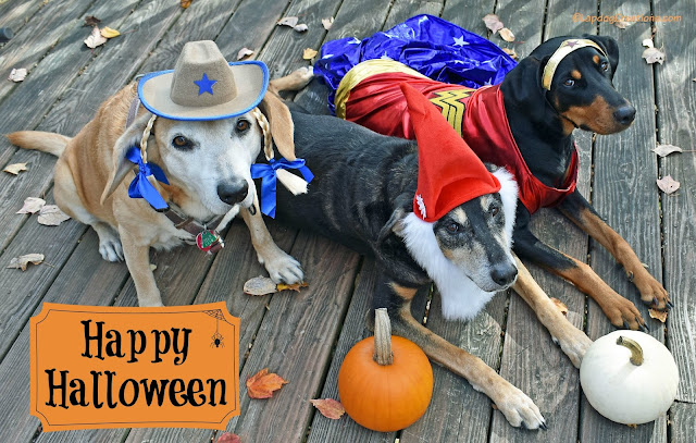 halloween dogs dressed up rescue adopt