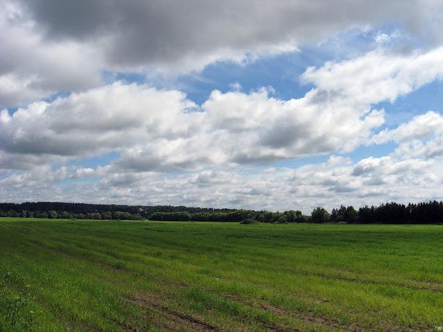 одинцовский район поле