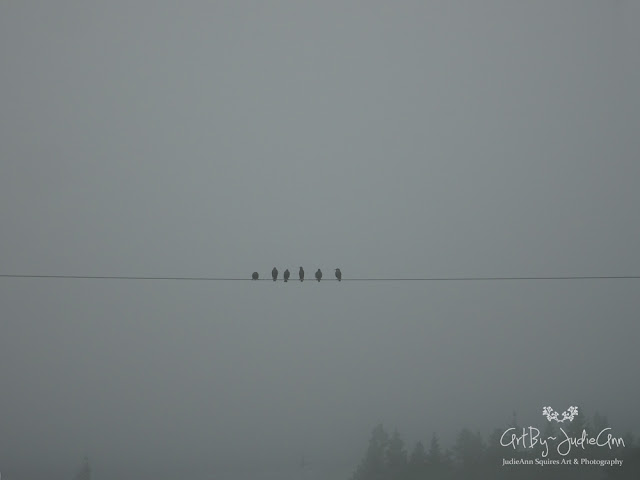 Starling On A Line Photo