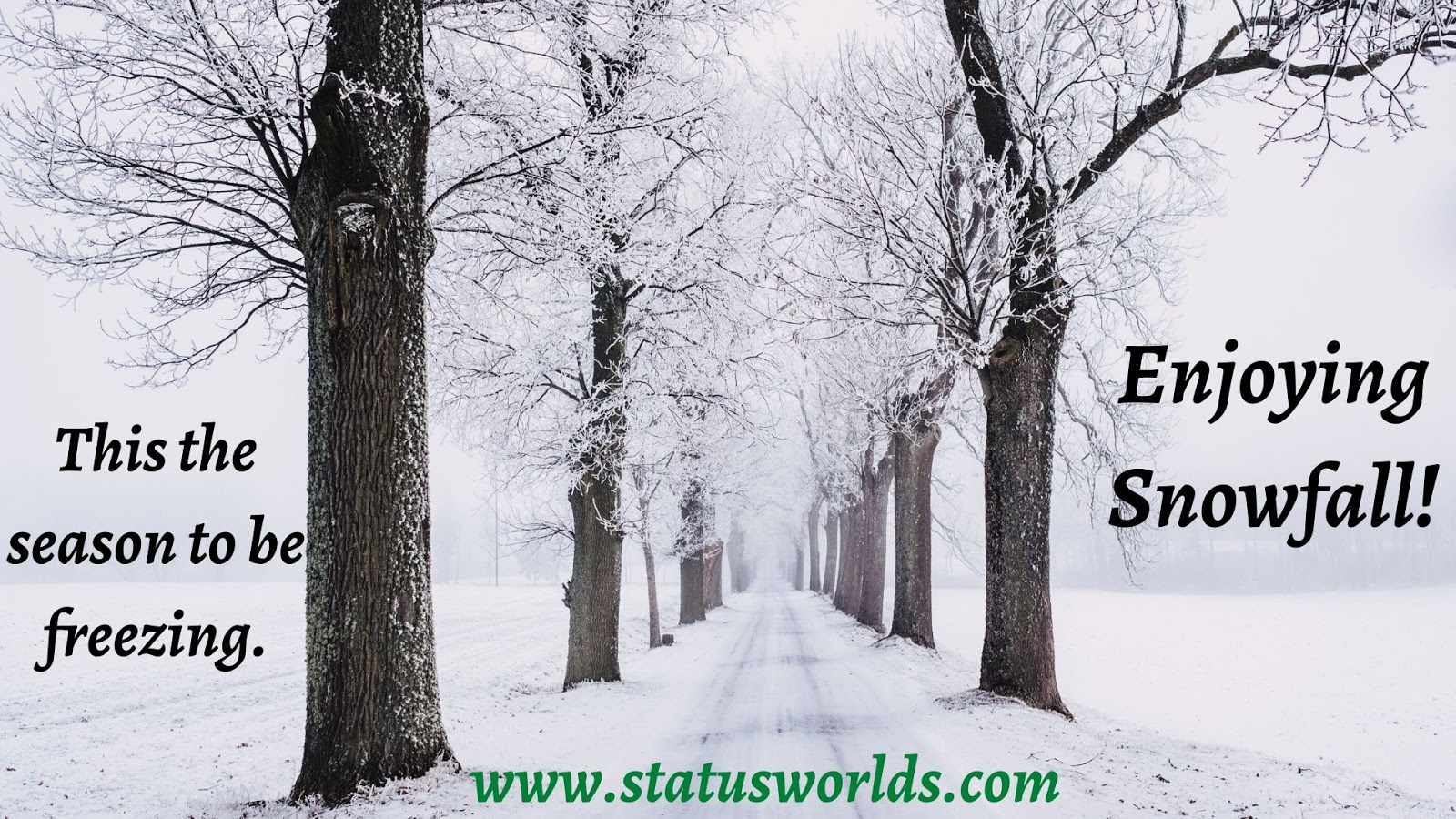 200 Top Level Winter Snowfall Status Caption Quotes 2021 For A Winter Lover Status World Explore 613 winter quotes by authors including victor hugo, albert camus, and paul theroux at brainyquote. quotes 2021 for a winter lover