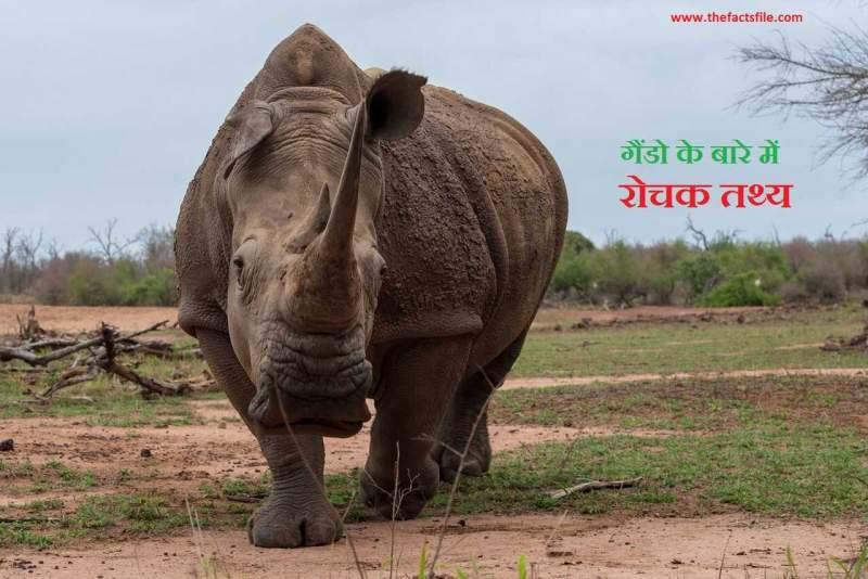 गेंडो के बारे में जानकारी | 20 Interesting facts about Rhinos | Rhinoceros in Hindi